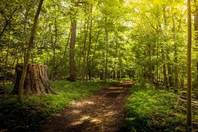 5 cách nuôi dưỡng tâm hồn với triết lý Thiền Nhật Bản