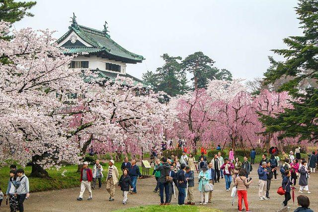 Những địa điểm ngắm hoa anh đào đẹp nhất ở Nhật Bản